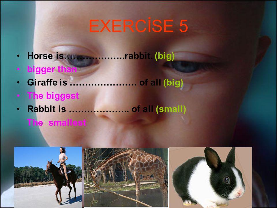 EXERCİSE 5 Horse is………………..rabbit. (big) bigger than Giraffe is ………………….