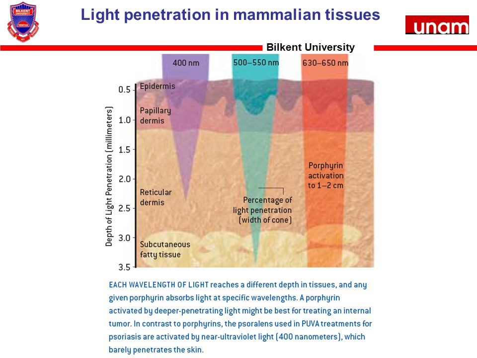 Light penetration in mammalian tissues Bilkent University