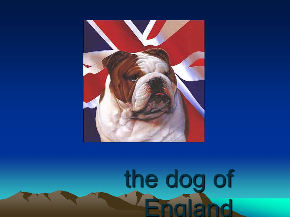 the dog of England