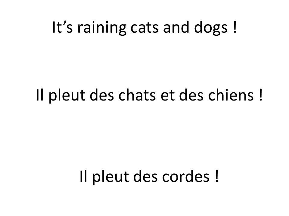 It's raining cats and dogs ! Il pleut des chats et des chiens ! Il pleut des cordes !
