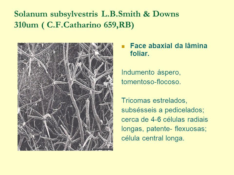 Solanum subsylvestris L.B.Smith & Downs 310um ( C.F.Catharino 659,RB) Face abaxial da lâmina foliar.