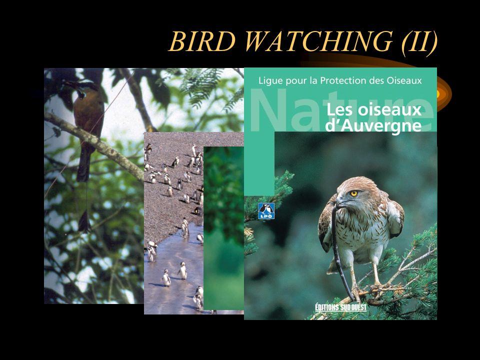 BIRD WATCHING Bird watchers (birders): largest single group of ecotourists around the World.