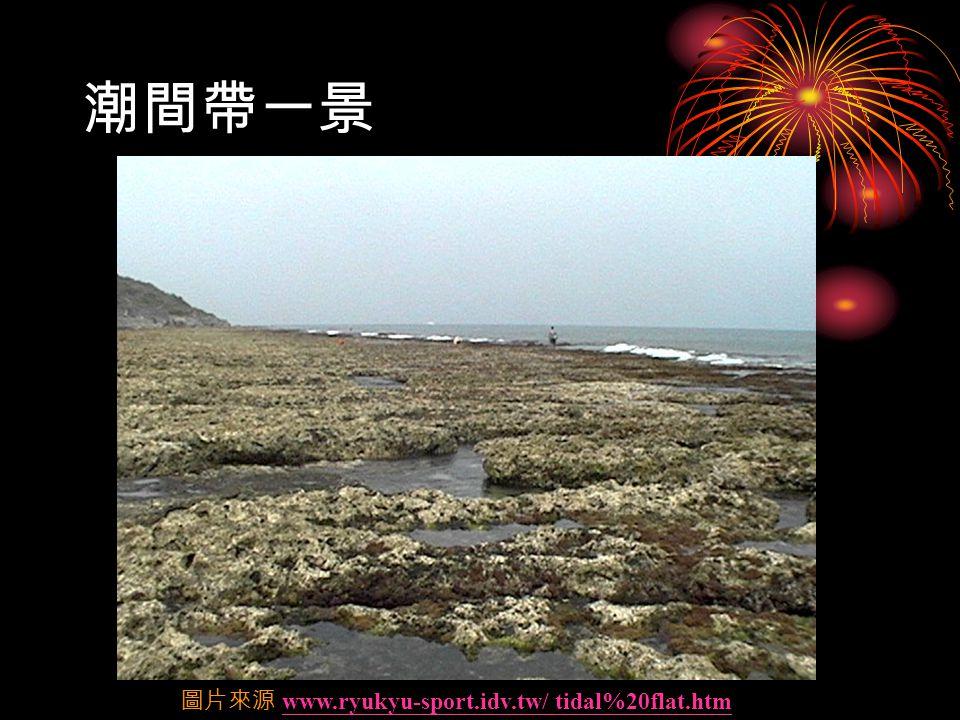 潮間帶一景 圖片來源 www.ryukyu-sport.idv.tw/ tidal%20flat.htmwww.ryukyu-sport.idv.tw/ tidal%20flat.htm