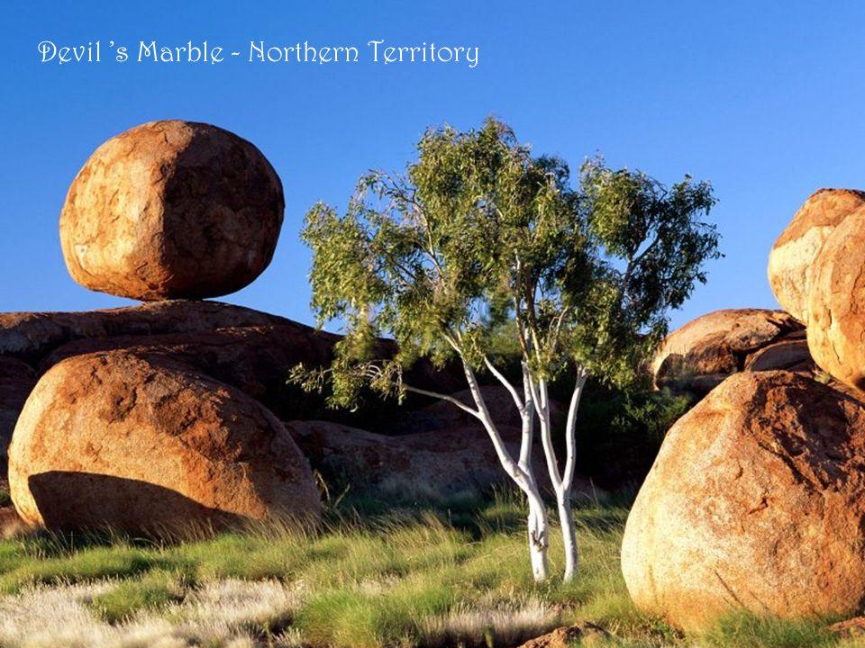 Spinifex - végétation de l 'Outback