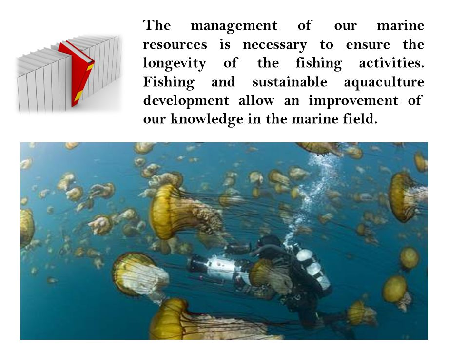 The management of our marine resources is necessary to ensure the longevity of the fishing activities. Fishing and sustainable aquaculture development