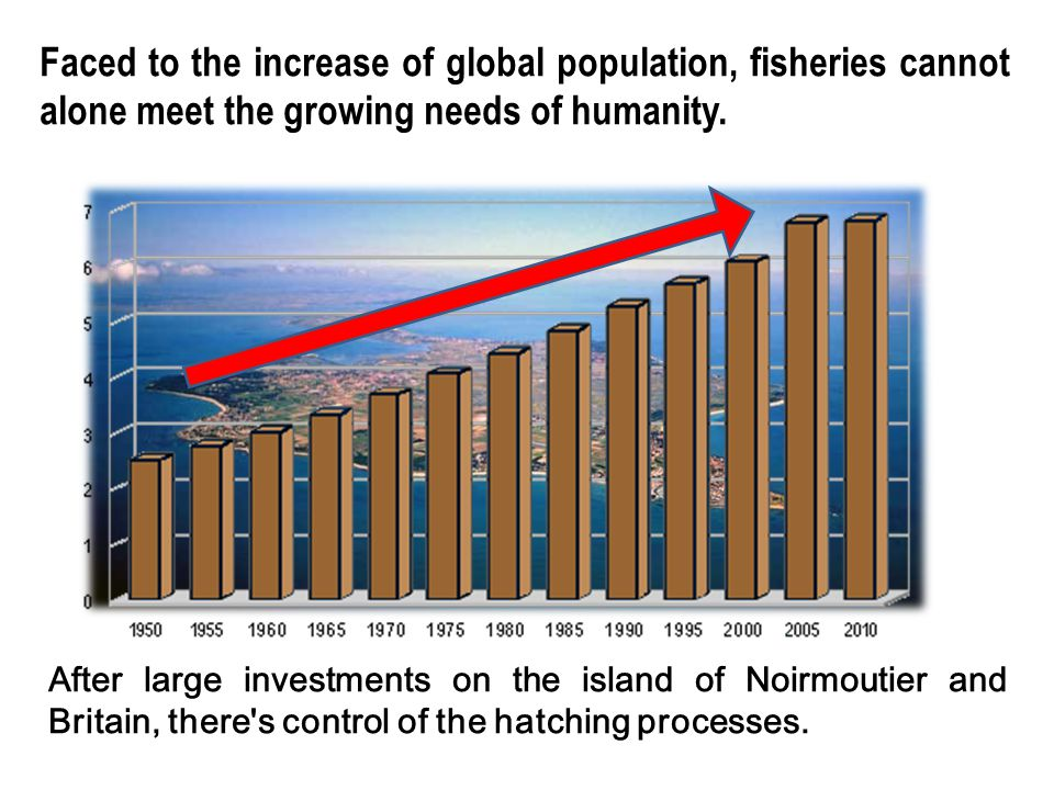 Faced to the increase of global population, fisheries cannot alone meet the growing needs of humanity. After large investments on the island of Noirmo