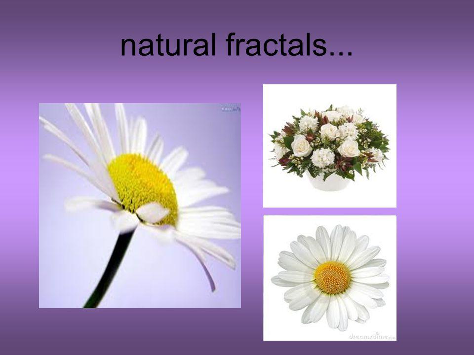 natural fractals...