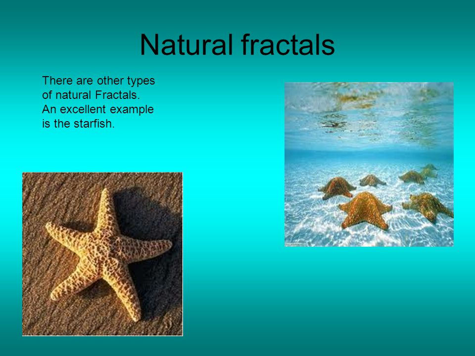 Natural fractals There are other types of natural Fractals. An excellent example is the starfish.