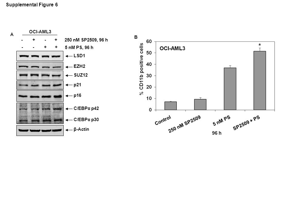 B * OCI-AML3 p21 p16 EZH2 C/EBPα p42 C/EBPα p30 LSD1 SUZ12 β-Actin 250 nM SP2509, 96 h 5 nM PS, 96 h - - + + - + A Supplemental Figure 6