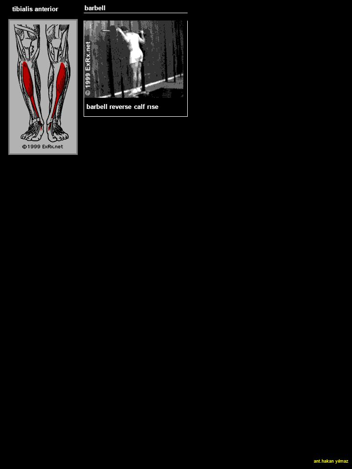 tibialis anterior barbell SLED HACK SQUAT barbell reverse calf rıse ant.hakan yılmaz