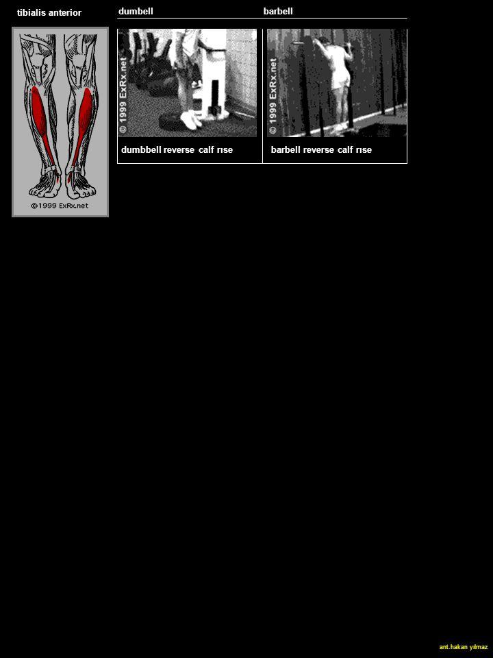 tibialis anterior dumbell SLED HACK SQUAT dumbbell reverse calf rıse barbell reverse calf rıse ant.hakan yılmaz barbell