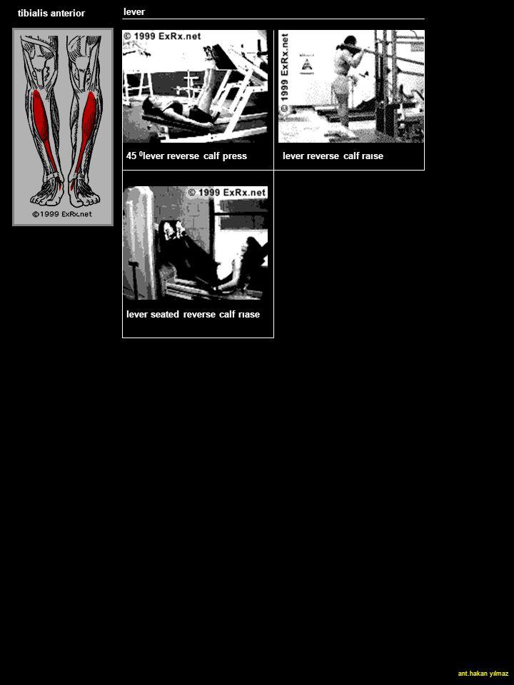 tibialis anterior lever SLED HACK SQUAT lever reverse calf raıse 45 0 lever reverse calf press lever seated reverse calf rıase ant.hakan yılmaz