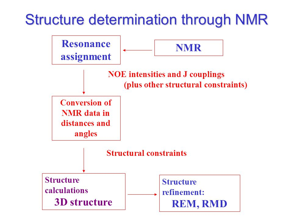 NMR Resonance assignment Structure calculations 3D structure NOE intensities and J couplings (plus other structural constraints) Conversion of NMR data in distances and angles Structure refinement: REM, RMD Structural constraints Structure determination through NMR