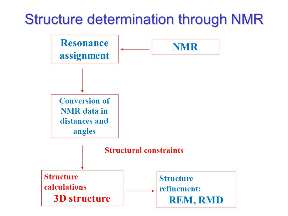 NMR Resonance assignment Structure calculations 3D structure Conversion of NMR data in distances and angles Structure refinement: REM, RMD Structural constraints Structure determination through NMR