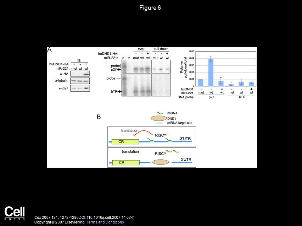 Figure 6 Cell 2007 131, 1273-1286DOI: (10.1016/j.cell.2007.11.034) Copyright © 2007 Elsevier Inc.