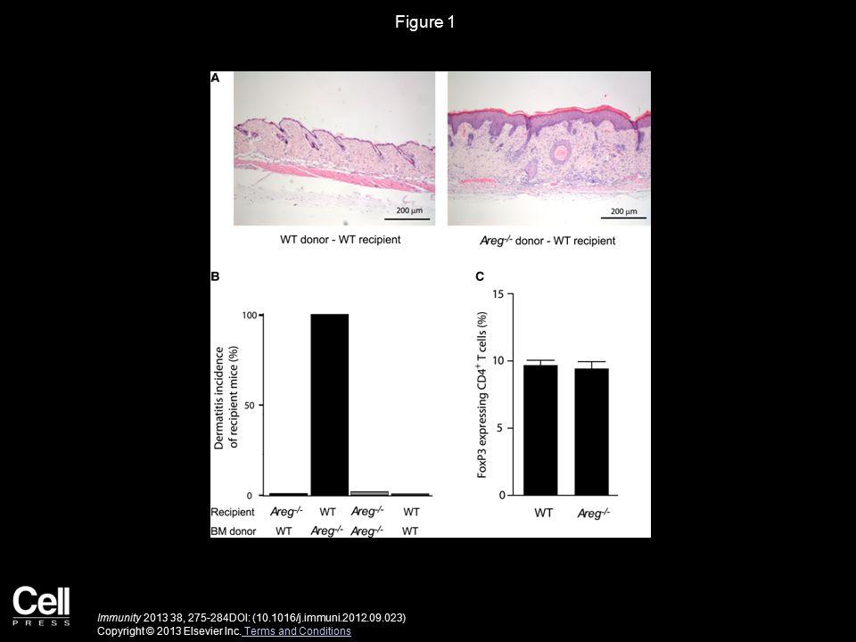 Figure 1 Immunity 2013 38, 275-284DOI: (10.1016/j.immuni.2012.09.023) Copyright © 2013 Elsevier Inc.