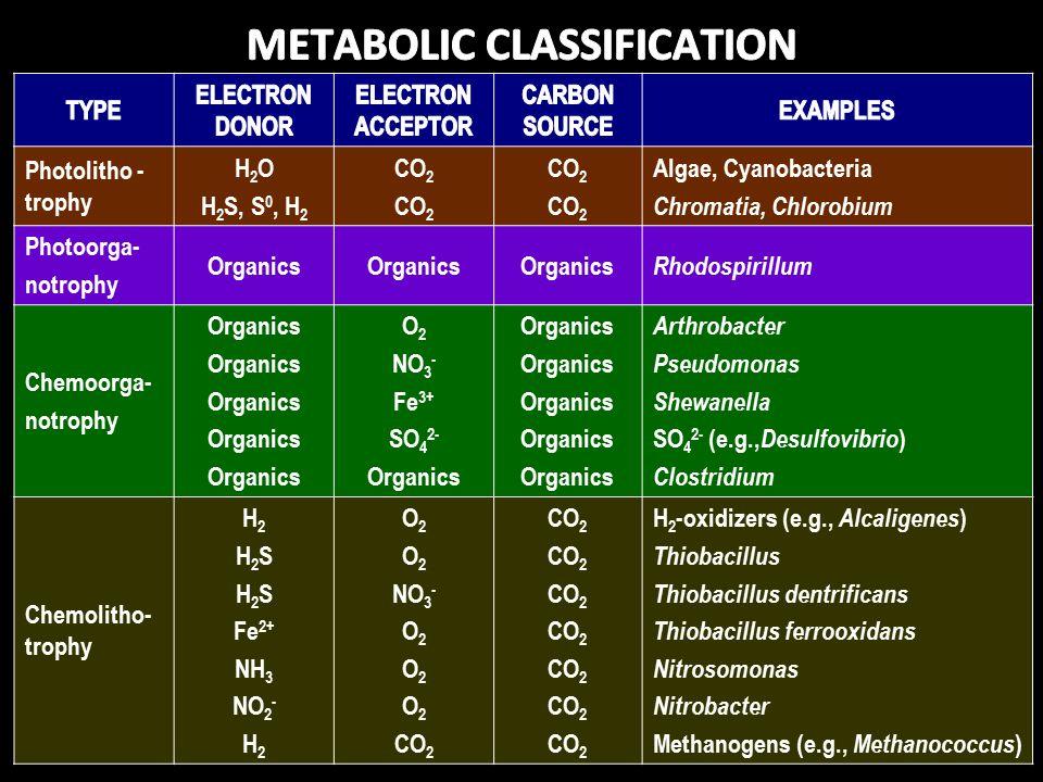 Photolitho - trophy H 2 O H 2 S, S 0, H 2 CO 2 Algae, Cyanobacteria Chromatia, Chlorobium Photoorga- notrophy Organics Rhodospirillum Chemoorga- notrophy Organics O 2 NO 3 - Fe 3+ SO 4 2- Organics Arthrobacter Pseudomonas Shewanella SO 4 2- (e.g., Desulfovibrio ) Clostridium Chemolitho- trophy H 2 H 2 S Fe 2+ NH 3 NO 2 - H 2 O 2 NO 3 - O 2 CO 2 H 2 -oxidizers (e.g., Alcaligenes ) Thiobacillus Thiobacillus dentrificans Thiobacillus ferrooxidans Nitrosomonas Nitrobacter Methanogens (e.g., Methanococcus )