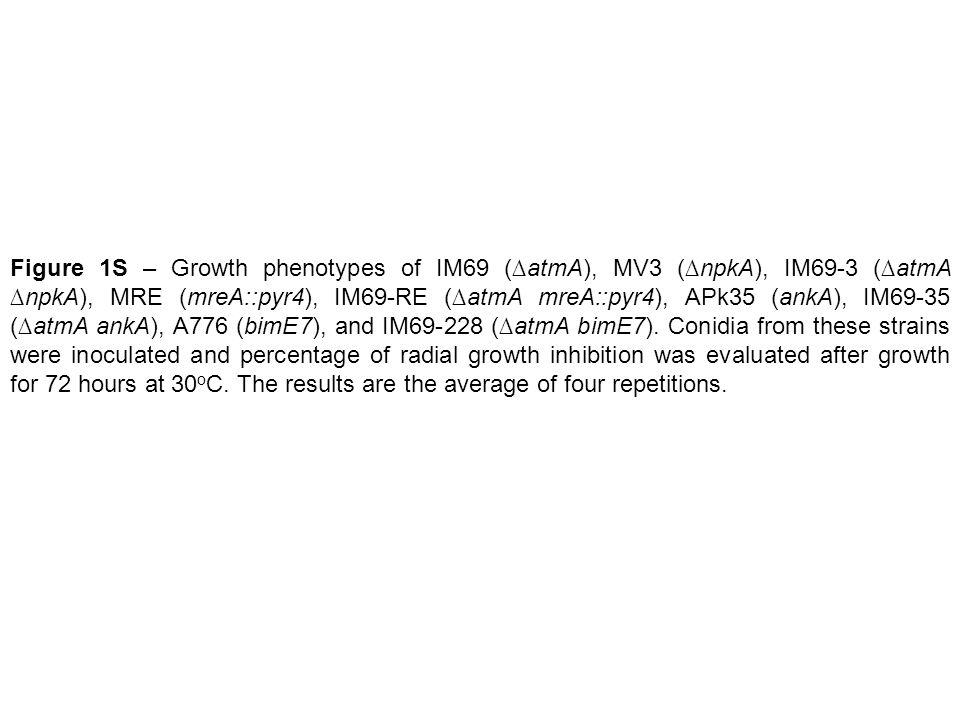 Figure 1S – Growth phenotypes of IM69 (∆atmA), MV3 (∆npkA), IM69-3 (∆atmA ∆npkA), MRE (mreA::pyr4), IM69-RE (∆atmA mreA::pyr4), APk35 (ankA), IM69-35 (∆atmA ankA), A776 (bimE7), and IM69-228 (∆atmA bimE7).