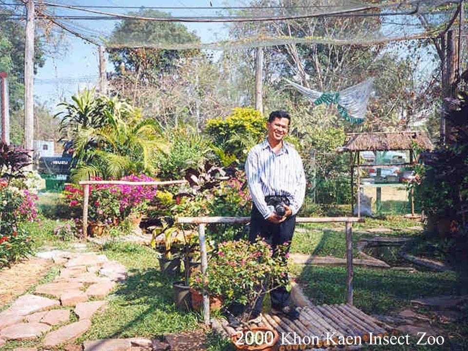 1998 Doi Chiang Dao Pa Kea