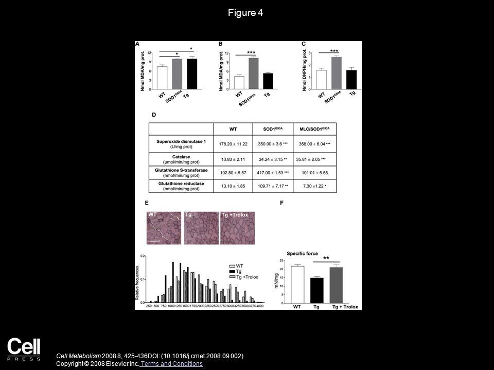 Figure 4 Cell Metabolism 2008 8, 425-436DOI: (10.1016/j.cmet.2008.09.002) Copyright © 2008 Elsevier Inc.