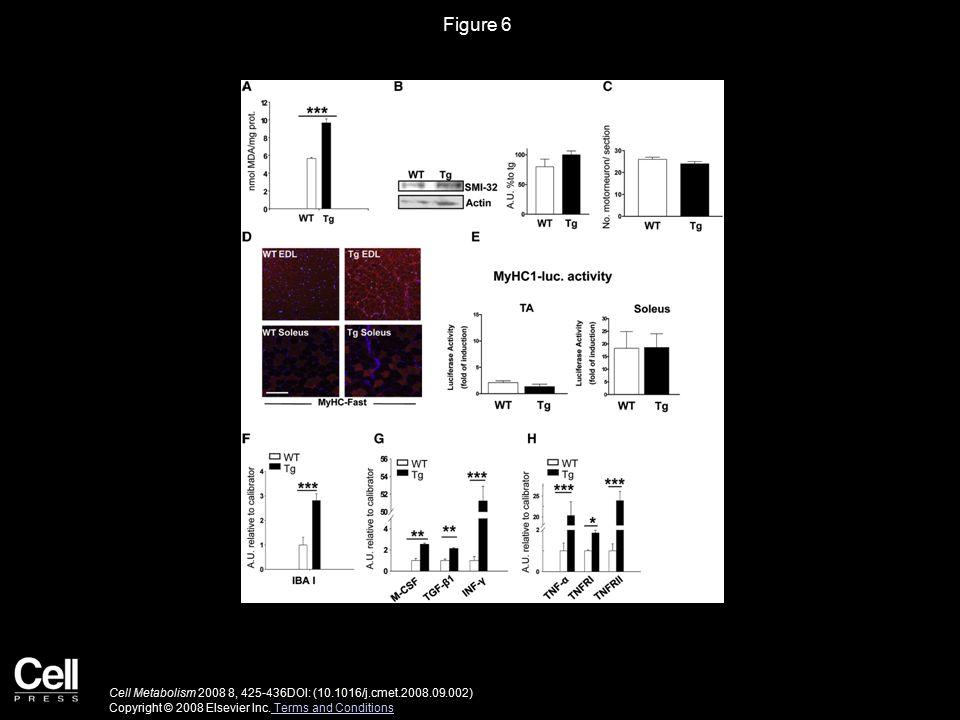 Figure 6 Cell Metabolism 2008 8, 425-436DOI: (10.1016/j.cmet.2008.09.002) Copyright © 2008 Elsevier Inc.