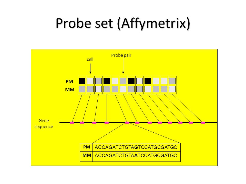 PM MM cell Probe pair Gene sequence ACCAGATCTGTAGTCCATGCGATGC ACCAGATCTGTAATCCATGCGATGC PM MM Probe set (Affymetrix)