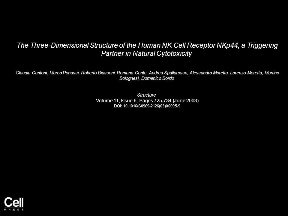 The Three-Dimensional Structure of the Human NK Cell Receptor NKp44, a Triggering Partner in Natural Cytotoxicity Claudia Cantoni, Marco Ponassi, Roberto Biassoni, Romana Conte, Andrea Spallarossa, Alessandro Moretta, Lorenzo Moretta, Martino Bolognesi, Domenico Bordo Structure Volume 11, Issue 6, Pages 725-734 (June 2003) DOI: 10.1016/S0969-2126(03)00095-9