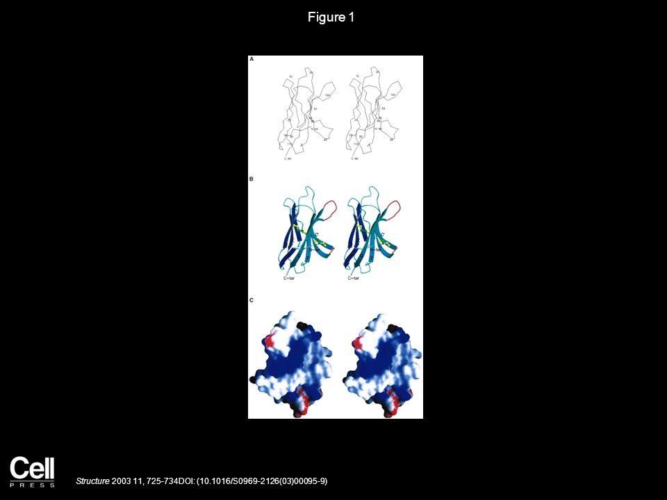 Figure 1 Structure 2003 11, 725-734DOI: (10.1016/S0969-2126(03)00095-9)