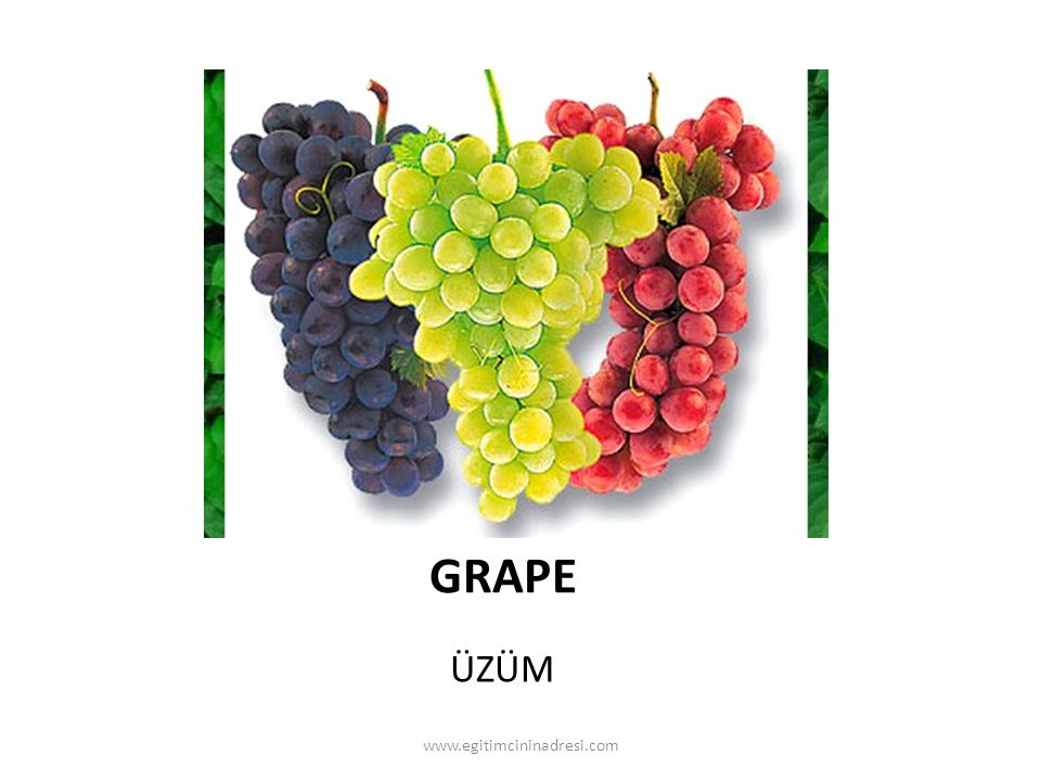 GRAPE ÜZÜM www.egitimcininadresi.com