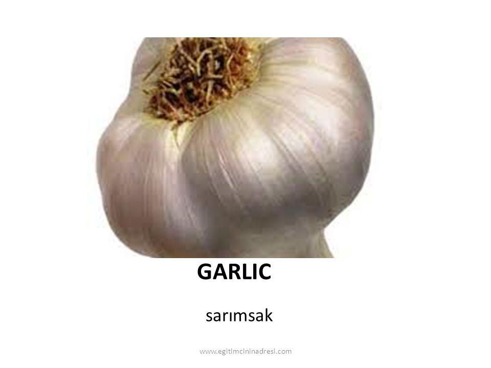 GARLIC sarımsak www.egitimcininadresi.com