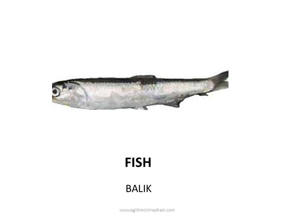 FISH BALIK www.egitimcininadresi.com