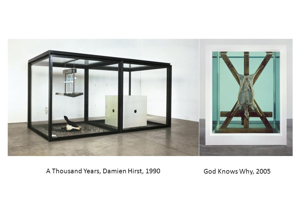 A Thousand Years, Damien Hirst, 1990 God Knows Why, 2005