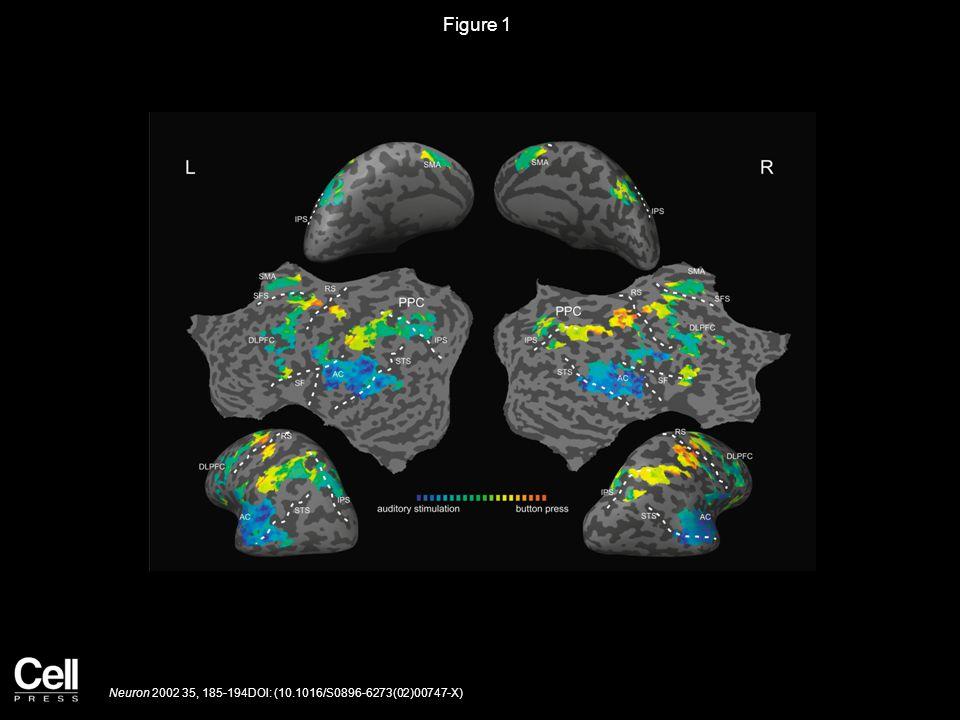 Figure 1 Neuron 2002 35, 185-194DOI: (10.1016/S0896-6273(02)00747-X)