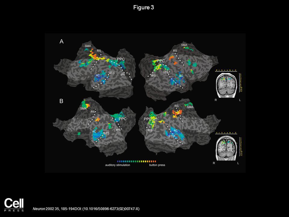 Figure 3 Neuron 2002 35, 185-194DOI: (10.1016/S0896-6273(02)00747-X)