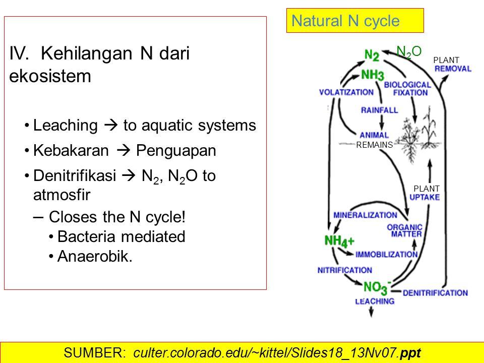 IV. Kehilangan N dari ekosistem Leaching  to aquatic systems Kebakaran  Penguapan Denitrifikasi  N 2, N 2 O to atmosfir – Closes the N cycle! Bacte