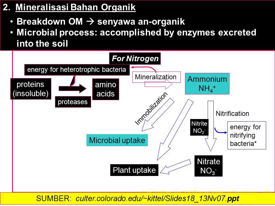 2. Mineralisasi Bahan Organik Breakdown OM  senyawa an-organik Microbial process: accomplished by enzymes excreted into the soil Microbial uptake Imm