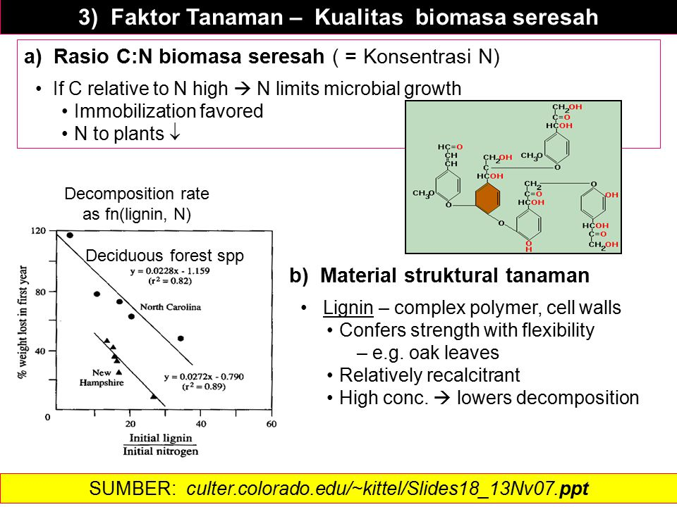 3) Faktor Tanaman – Kualitas biomasa seresah a) Rasio C:N biomasa seresah ( = Konsentrasi N) If C relative to N high  N limits microbial growth Immobilization favored N to plants  Decomposition rate as fn(lignin, N) Deciduous forest spp b) Material struktural tanaman Lignin – complex polymer, cell walls Confers strength with flexibility – e.g.
