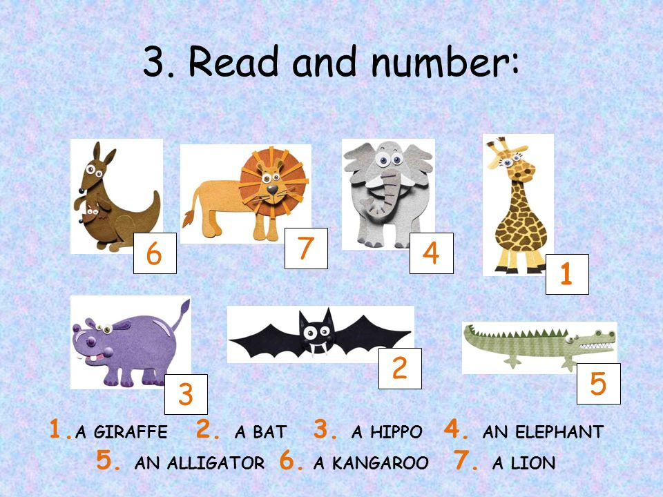 3. Read and number: 6 3 7 2 4 1 5 1. A GIRAFFE 2.
