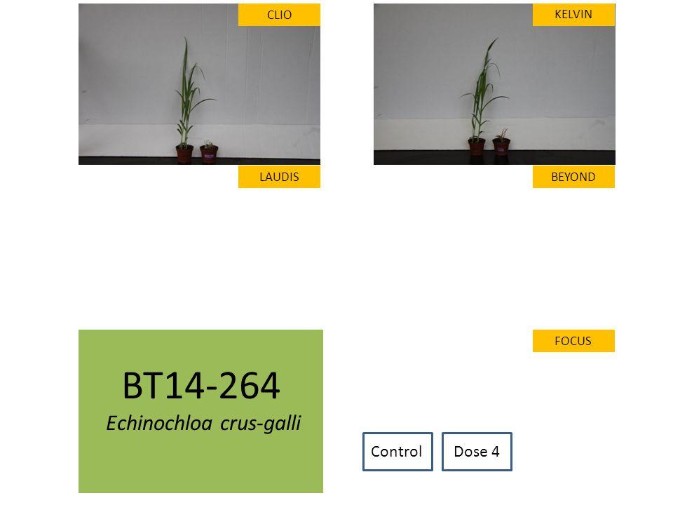 BT14-264 Echinochloa crus-galli CLIO LAUDIS FOCUS KELVIN BEYOND ControlDose 4