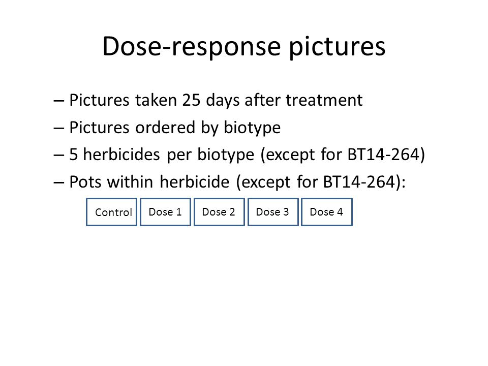 Dose-response pictures – Pictures taken 25 days after treatment – Pictures ordered by biotype – 5 herbicides per biotype (except for BT14-264) – Pots within herbicide (except for BT14-264): Dose 1Dose 2Dose 3Dose 4 Control