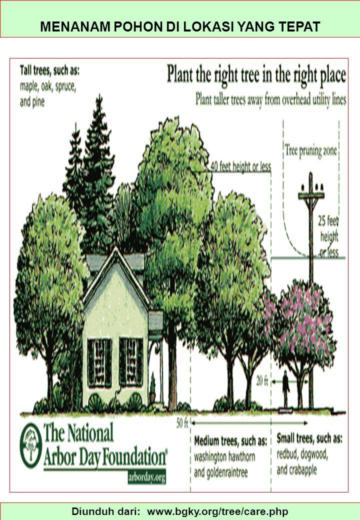 Diunduh dari: www.bgky.org/tree/care.php MENANAM POHON DI LOKASI YANG TEPAT