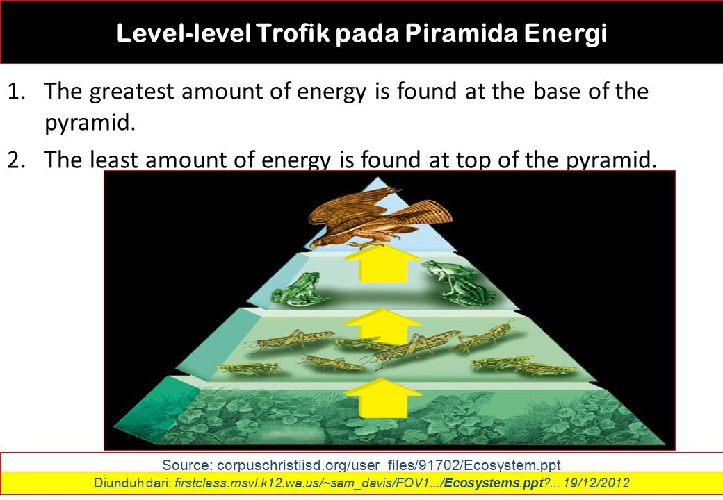 Level-level Trofik pada Piramida Energi 1.The greatest amount of energy is found at the base of the pyramid. 2.The least amount of energy is found at