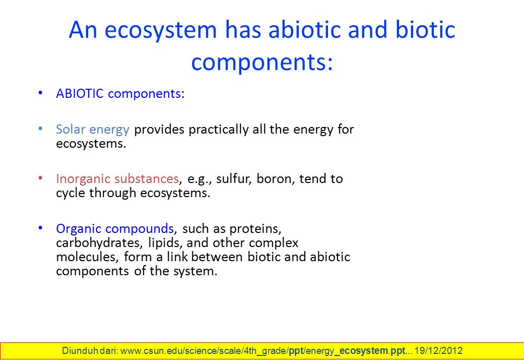 An ecosystem has abiotic and biotic components: ABIOTIC components: Solar energy provides practically all the energy for ecosystems. Inorganic substan