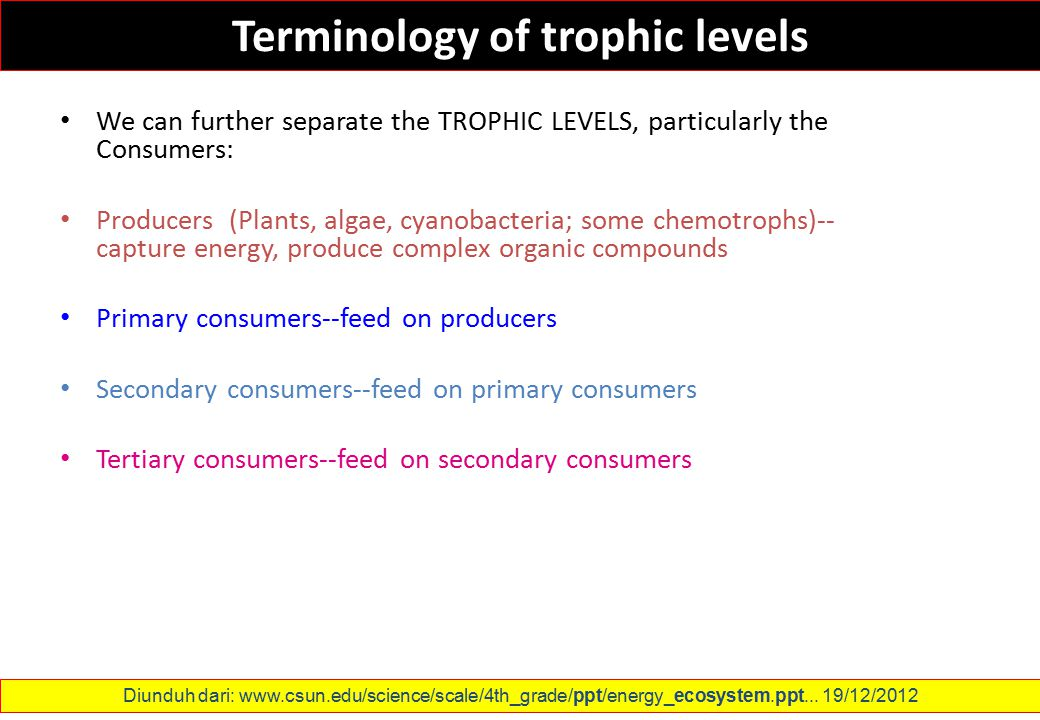 Terminology of trophic levels We can further separate the TROPHIC LEVELS, particularly the Consumers: Producers (Plants, algae, cyanobacteria; some ch