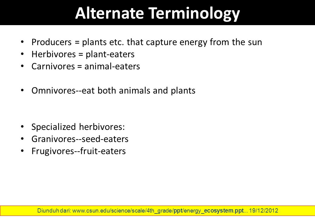 Alternate Terminology Producers = plants etc. that capture energy from the sun Herbivores = plant-eaters Carnivores = animal-eaters Omnivores--eat bot