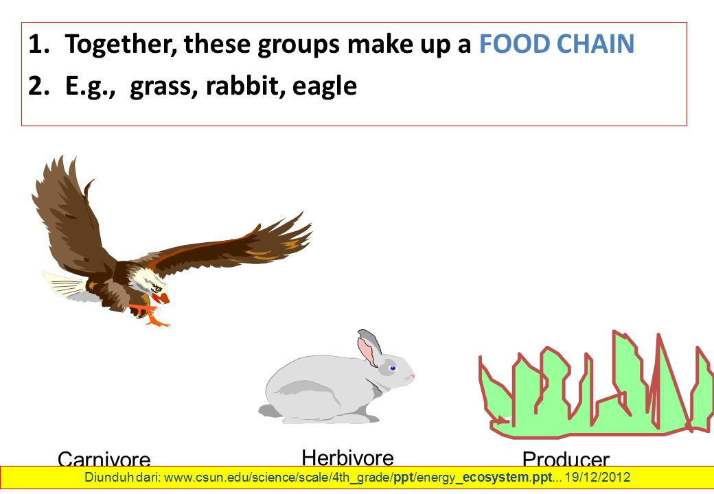 1.Together, these groups make up a FOOD CHAIN 2.E.g., grass, rabbit, eagle Carnivore Herbivore Producer Diunduh dari: www.csun.edu/science/scale/4th_g