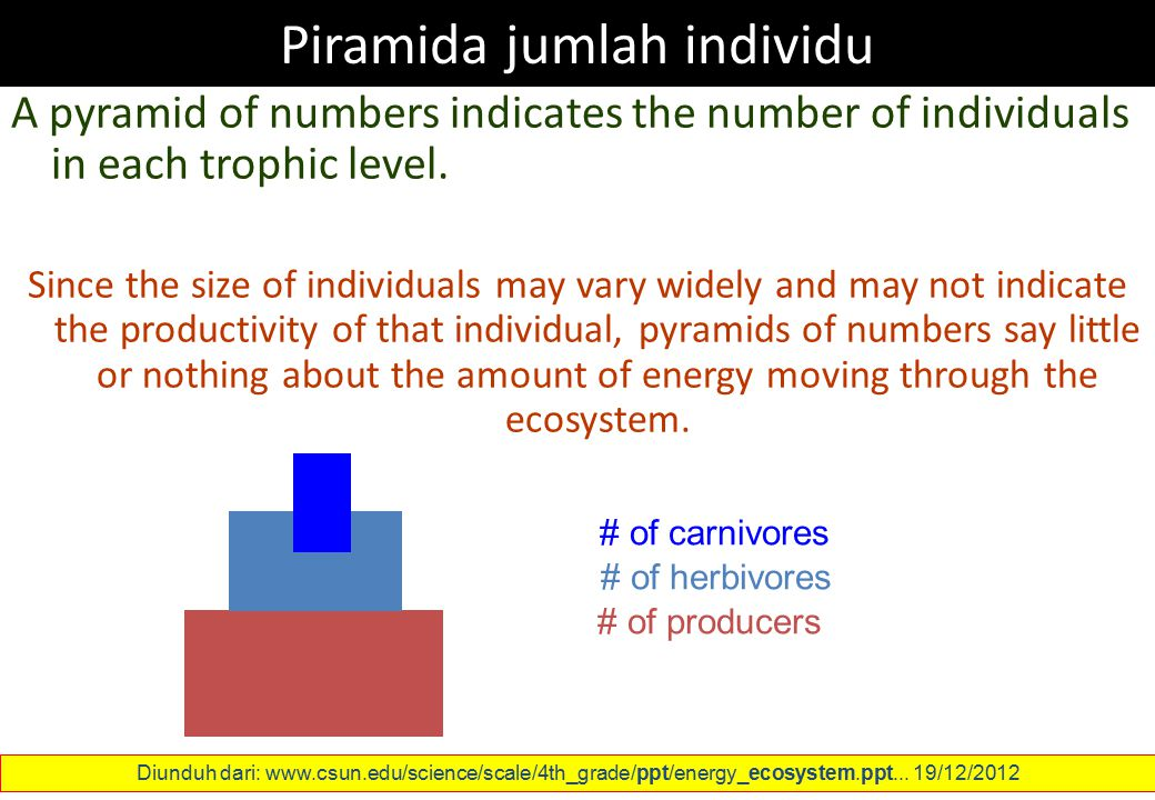 Piramida jumlah individu A pyramid of numbers indicates the number of individuals in each trophic level. Since the size of individuals may vary widely