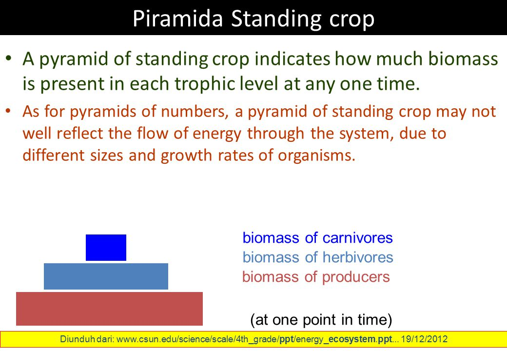 Piramida Standing crop A pyramid of standing crop indicates how much biomass is present in each trophic level at any one time. As for pyramids of numb