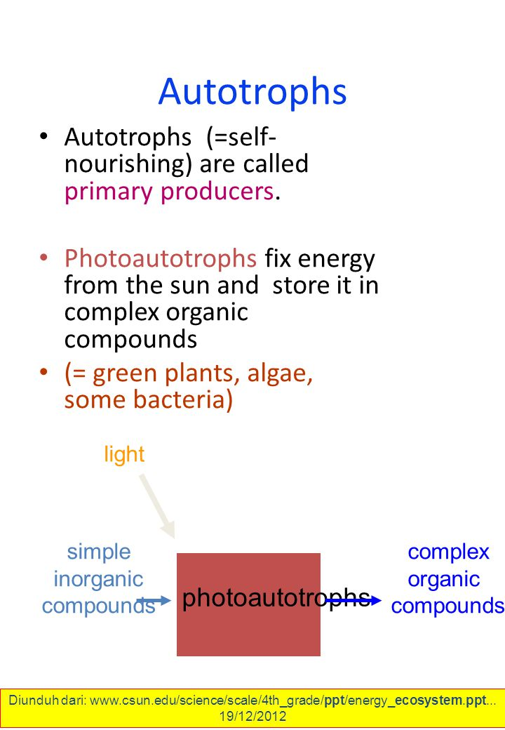 Autotrophs Autotrophs (=self- nourishing) are called primary producers.
