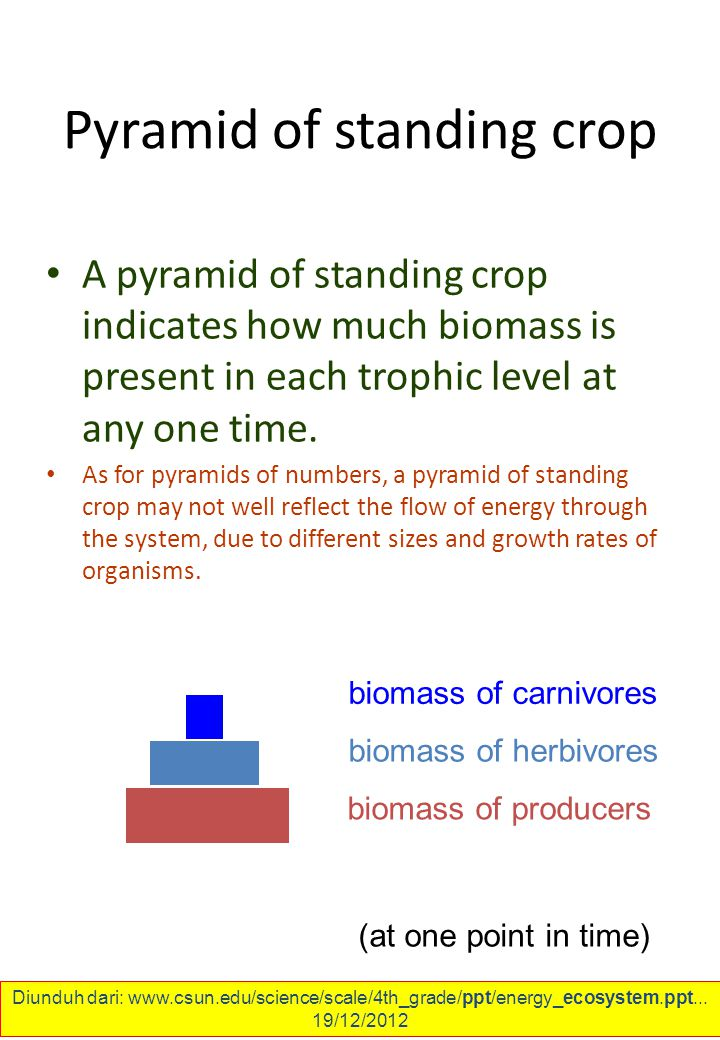 Pyramid of standing crop A pyramid of standing crop indicates how much biomass is present in each trophic level at any one time.
